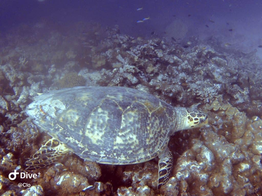 How to budget for Maldives Sea turtles excursions